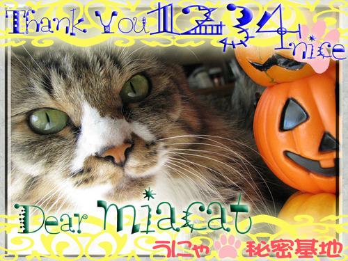 m_1234nice-miacat.jpg